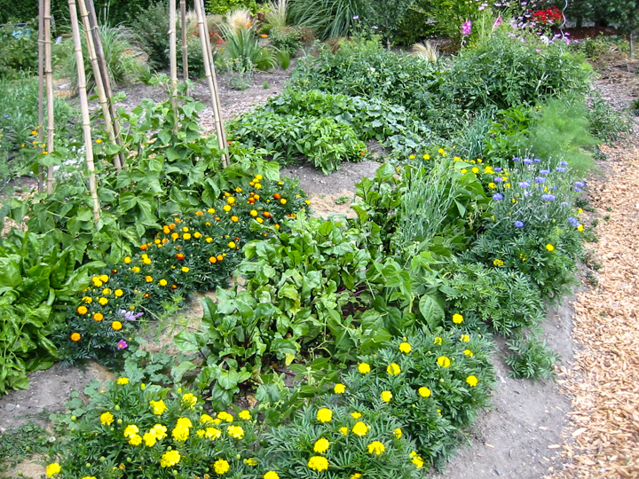 Organic Essential Gardeners And Maintenance In Seattle
